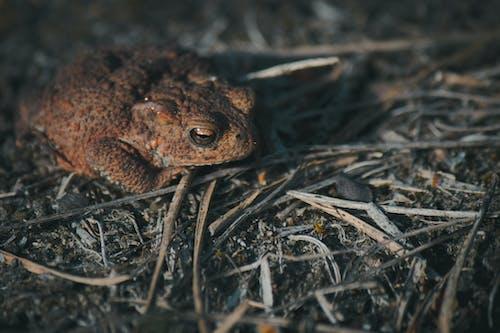 kara kurbağası, karakurbağaları, kurbağa, kurbağalar içeren Ücretsiz stok fotoğraf