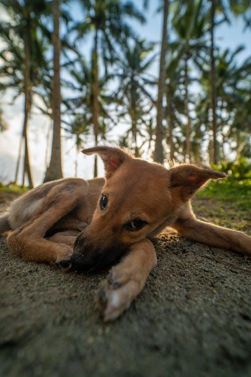 Free stock photo of cute, dog, focus, sun