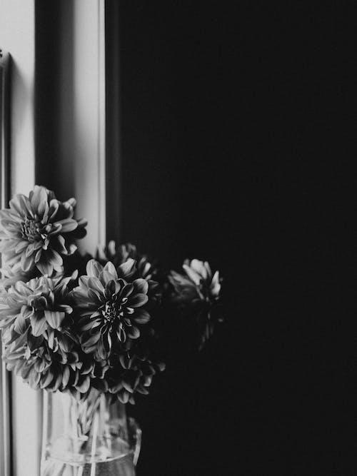 Darmowe zdjęcie z galerii z czarno-biały, flora, kompozycja kwiatowa, kwiat