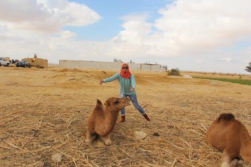 Kostenloses Stock Foto zu kamel, tier
