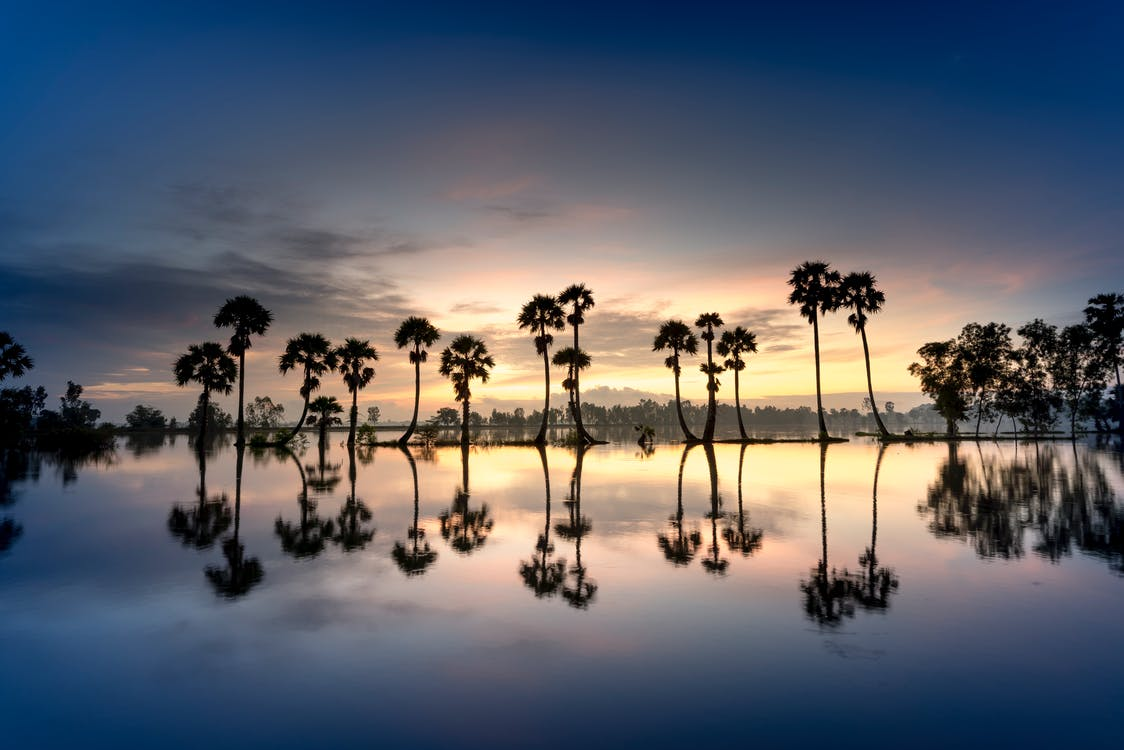 Reflection Of Trees On Water