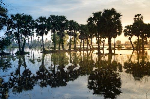 Immagine gratuita di alberi, laghetto, placido, riflesso