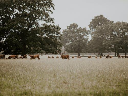 Fotos de stock gratuitas de al aire libre, animales, arboles, campo
