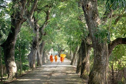 Foto d'estoc gratuïta de a l'aire lliure, arbres, boscos, camí
