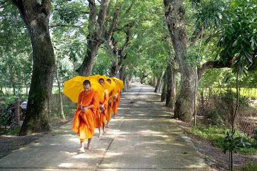 Δωρεάν στοκ φωτογραφιών με Άνθρωποι, δέντρα, δρόμος, καλόγεροι