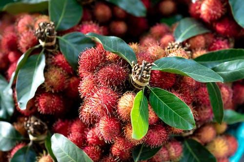 Gratis stockfoto met biologisch, fabriceren, fruit, gerijpt