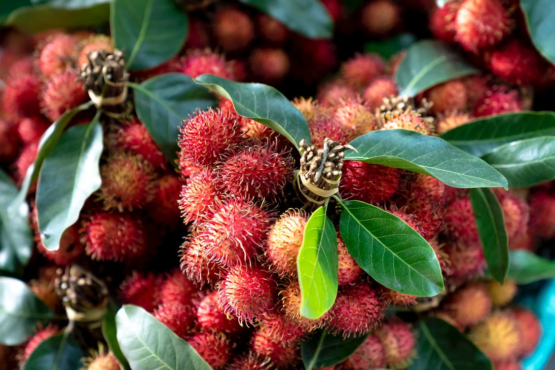 Close-up Photo of Red Rambutan Fruits