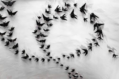 Foto stok gratis burung-burung, dasar, hitam dan putih, keramik