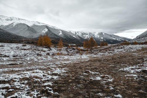 Бесплатное стоковое фото с гора, живописный, заснеженный, зима