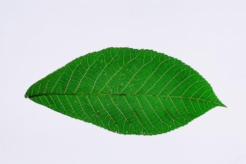 Бесплатное стоковое фото с абстрактный, вены, дизайн, зеленый
