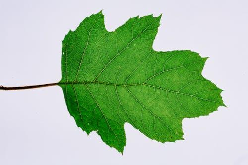 Ilmainen kuvapankkikuva tunnisteilla ekologia, erilainen, irrallaan, kasvi