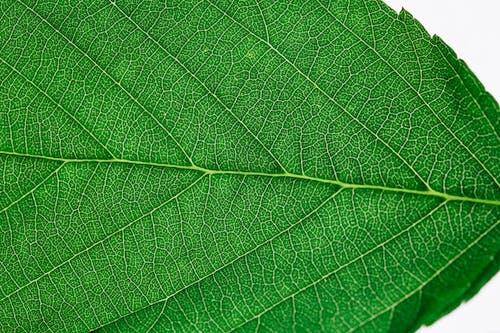 Kostnadsfri bild av ådror, asymmetri, blad, grönt löv
