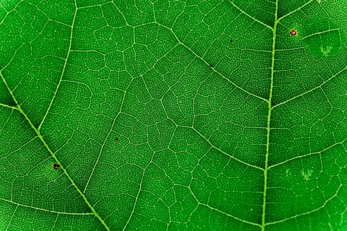 Macro Photo of Green Leaf