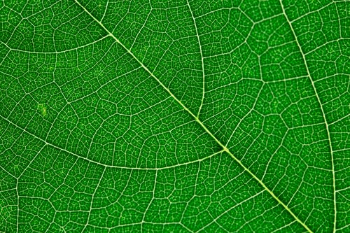 Close up view of green leaf and leaf veins