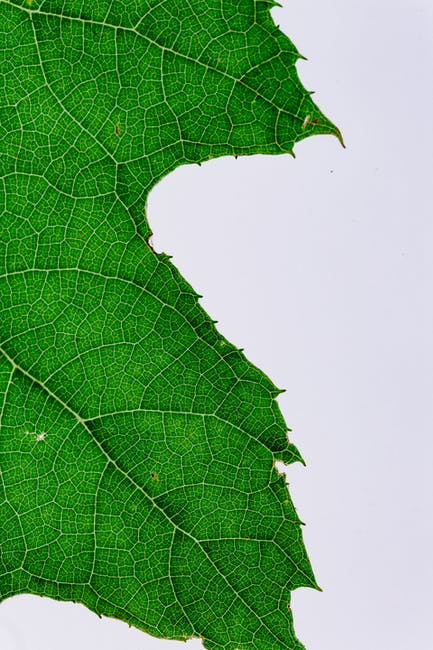 Green leaf close up photography