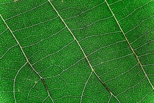 คลังภาพถ่ายฟรี ของ ภาพถ่ายมาโคร, สีเขียว, หลอดเลือดดำ, เนื้อผ้า