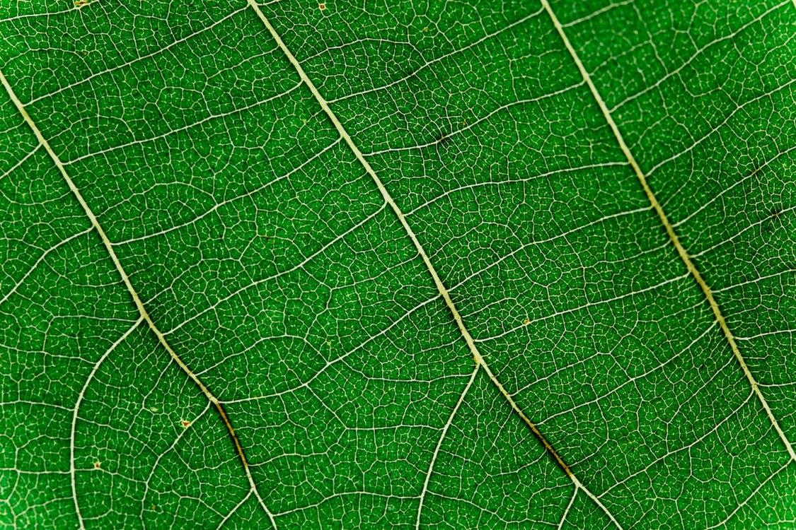 frunză, frunze, frunziș