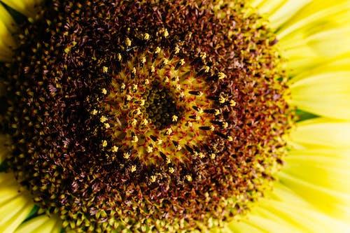 Foto stok gratis bagus, berbayang, bulat, bunga