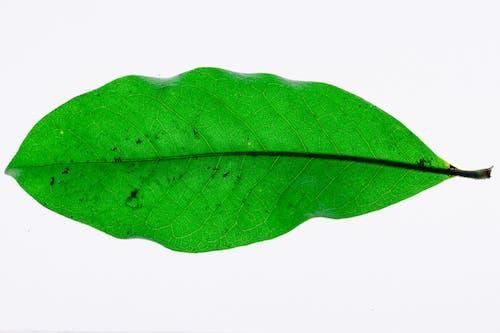 Photo of a green leaf