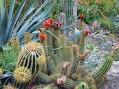nature, desert, garden