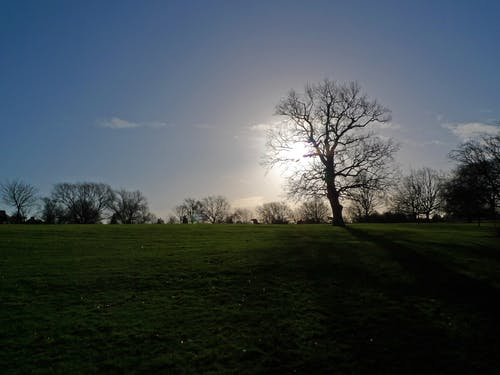 Free stock photo of leafless, sky, sun, tree