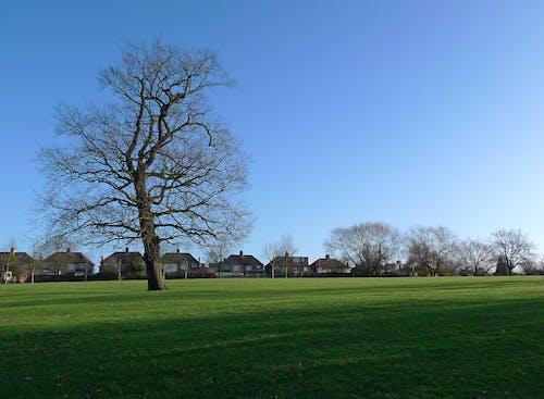 Free stock photo of houses, park, tree, winter