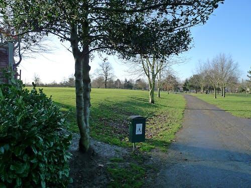 Free stock photo of park, path