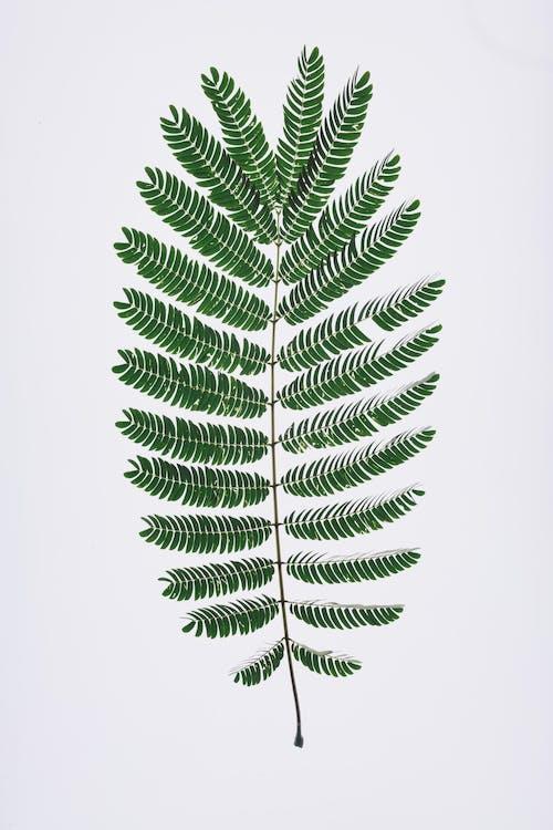 Ảnh lưu trữ miễn phí về dương xỉ, dương xỉ xanh, không thích, lá
