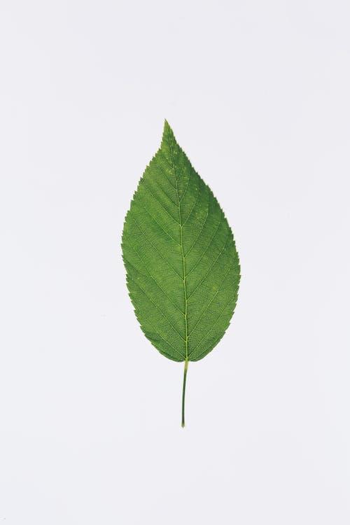 Фото зеленого листа