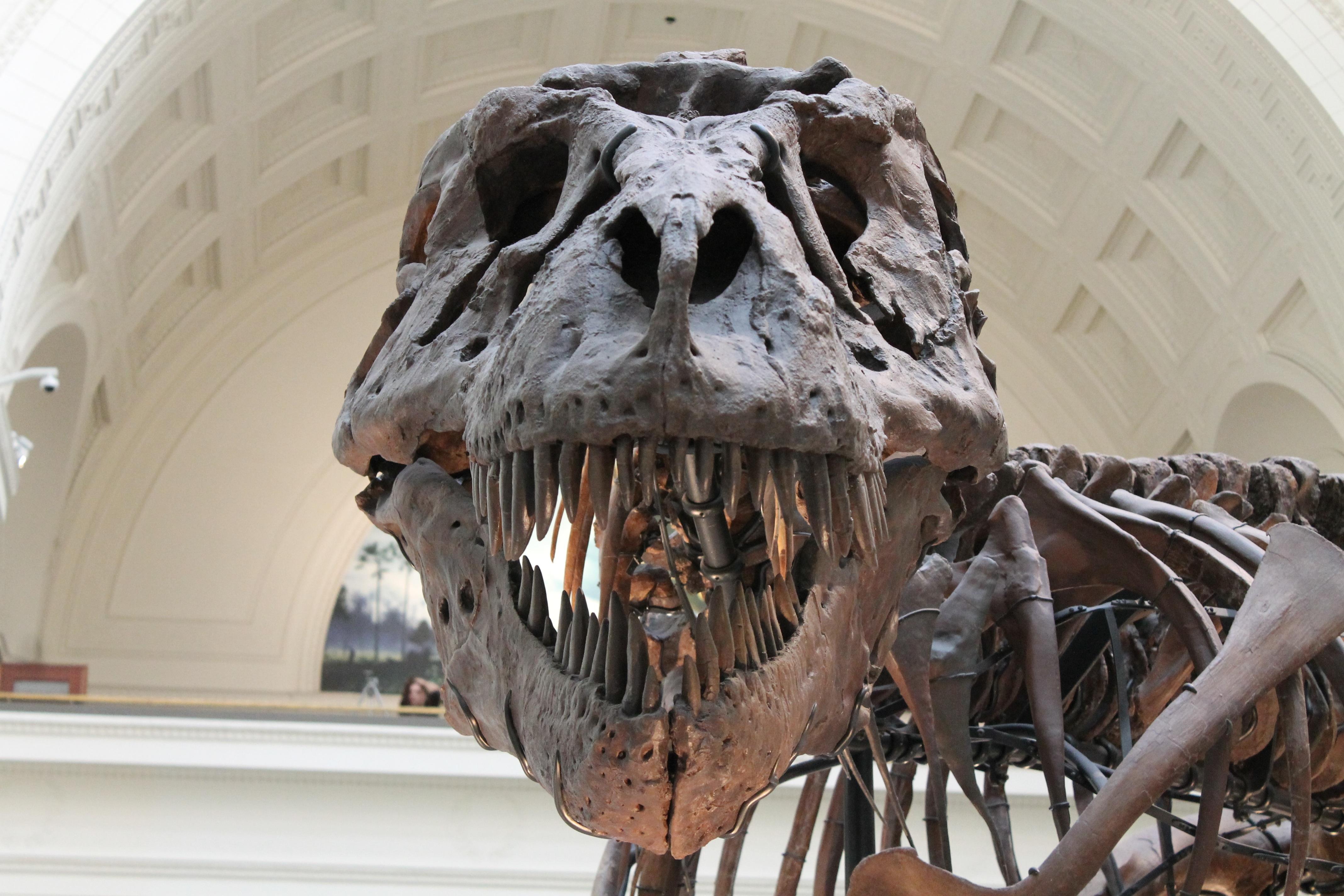fosilních fosilních dinosaurů