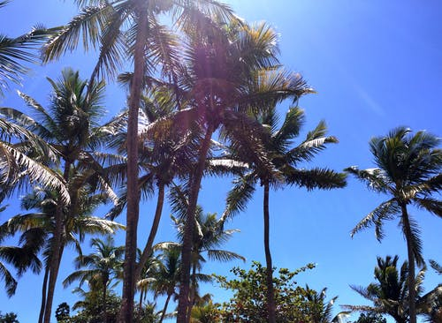 Ilmainen kuvapankkikuva tunnisteilla Karibialainen, kookospalmut, saari