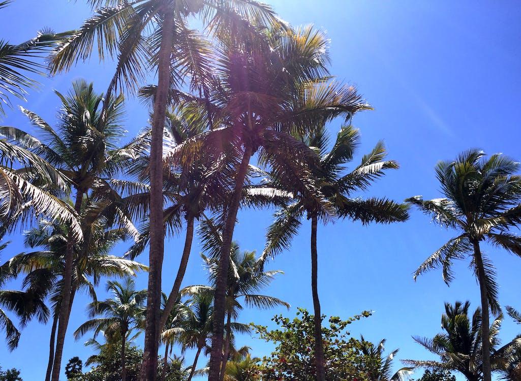 Карибський, кокосові пальми, Острів