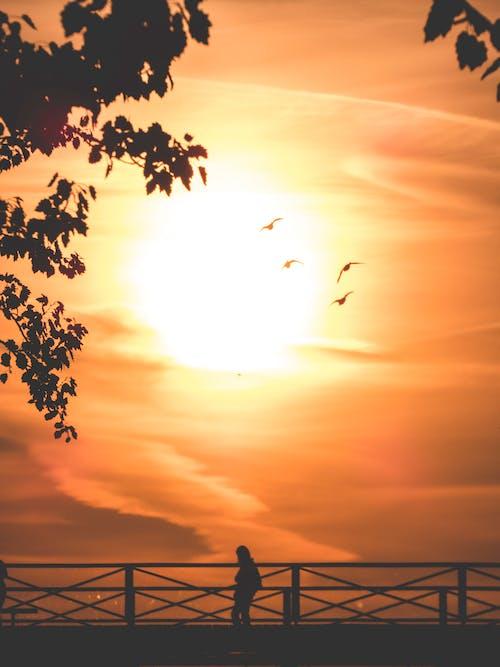 silouhettes, ブリッジ, 日の出の無料の写真素材