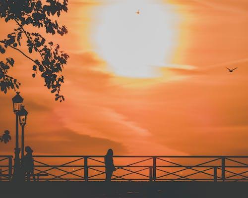 silouhettes, ブリッジ, 日の出, 空の無料の写真素材