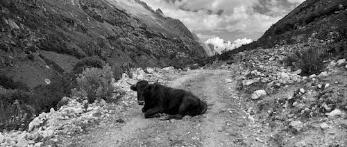 アンデス, トレッキング, ハイキング, ペルーの無料の写真素材