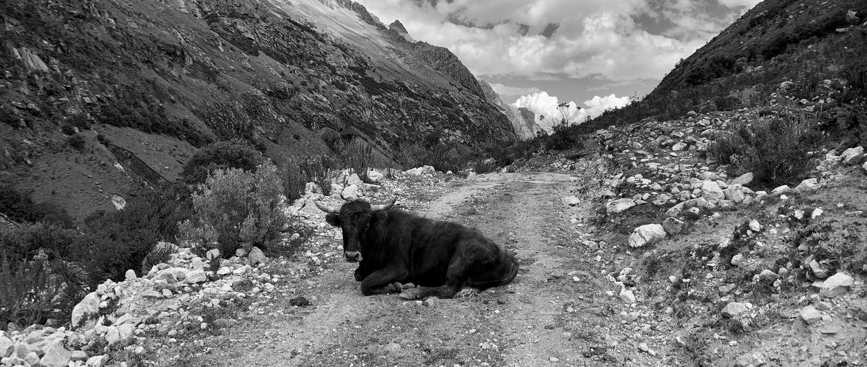andes, dağ geçidi, dağ yolu