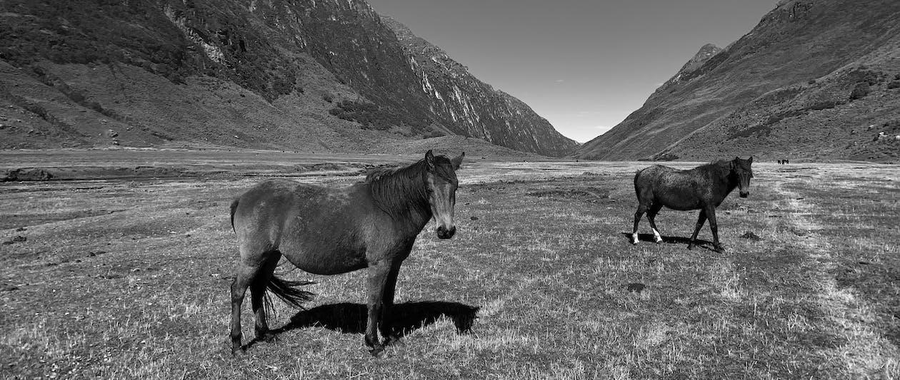 at, atlar, Peru
