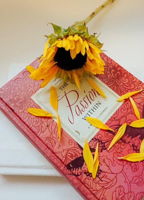Δωρεάν στοκ φωτογραφιών με αγάπη, ανάγνωση, απεικόνιση, βιβλία