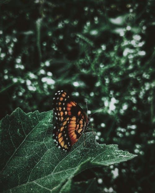 セレクティブフォーカス, バタフライ, パターン, マクロ撮影の無料の写真素材