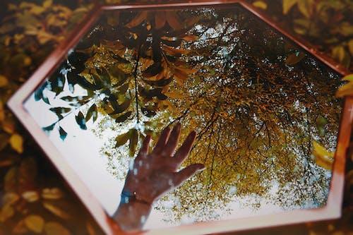 Kostnadsfri bild av brun, falla, färg, flora