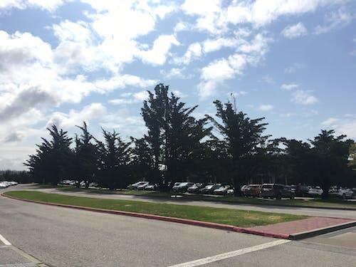 Photos gratuites de ciel nuageux, nuages, pins, route sinueuse