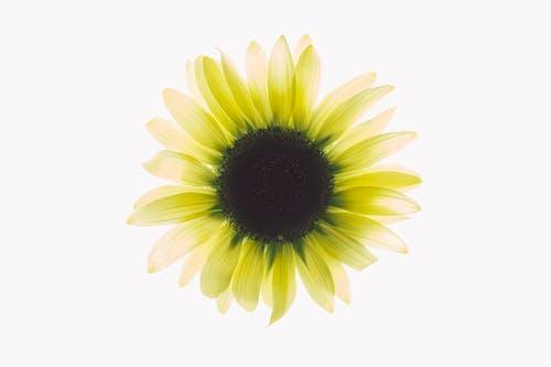 白と緑の花のクローズアップ写真