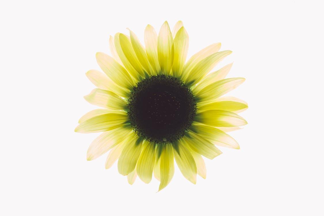delikatny, flora, kwiat