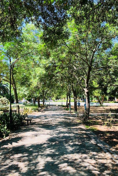 Imagine de stoc gratuită din grădină, pace, paradis, verde