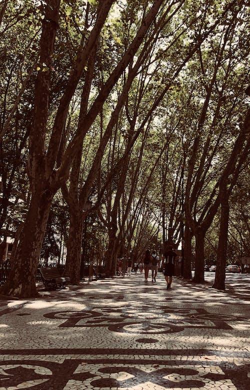 Imagine de stoc gratuită din avenidadaliberdade, Lisabona, luminile orașului, orașul meu