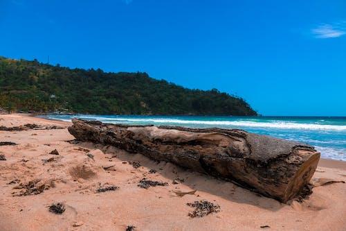 加勒比海, 地平線, 招手, 木柴 的 免費圖庫相片