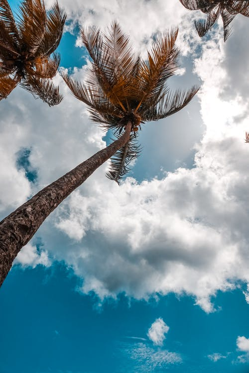 Low angle photography of brown palm trees