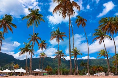 山, 海灘, 藍天, 高大的樹木 的 免費圖庫相片