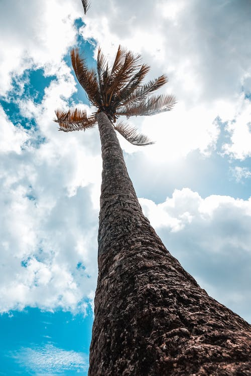 Low-angle Photo of Palm Tree