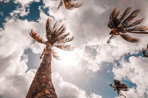 椰子樹, 藍天, 陽光, 雲 的 免費圖庫相片